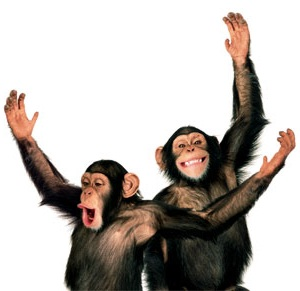 Web Hosting Chimps-1